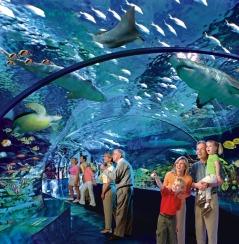 2011817-Shark-Lagoon